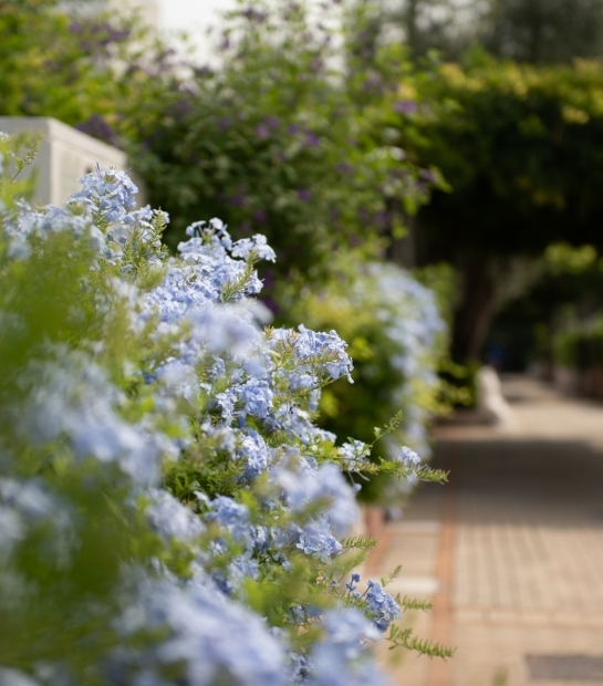 Fiori profumati nel giardino dell'Hotel